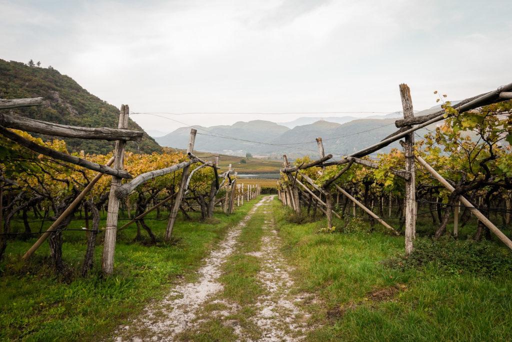 Schotterstrasse durch Weinberge am Kalterersee